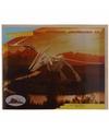 Dinosaurier Pteranodon bouwpakket